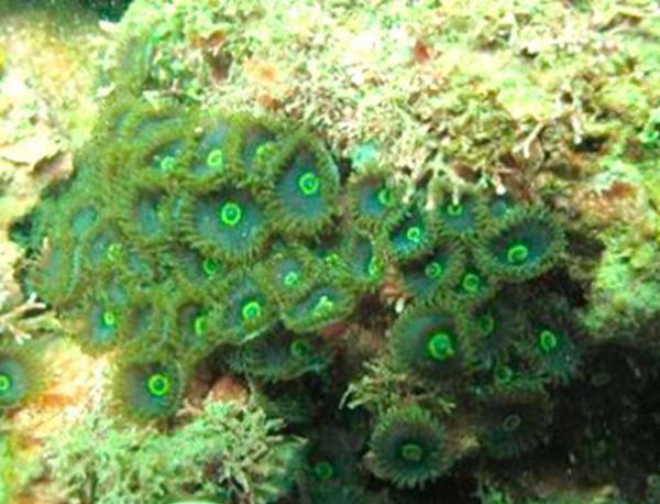 Descubren exótico arrecife con más de 60 especies en el municipio de Necoclí